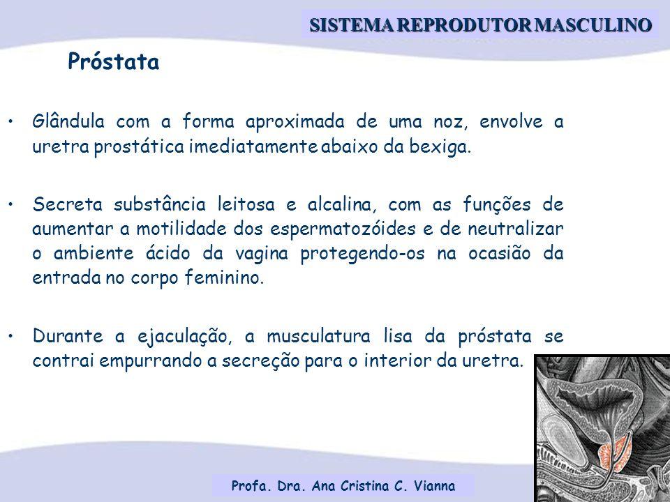 Profa. Dra. Ana Cristina C. Vianna SISTEMA REPRODUTOR MASCULINO Glândula com a forma aproximada de uma noz, envolve a uretra prostática imediatamente