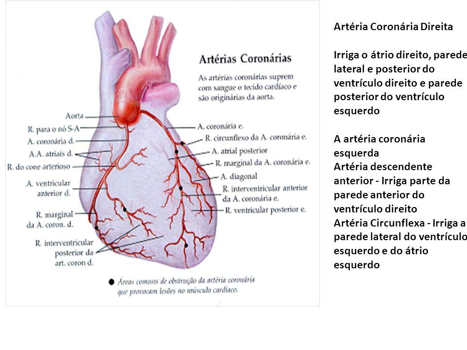 Artéria Coronária Direita Irriga o átrio direito, parede lateral e posterior do ventrículo direito e parede posterior do ventrículo esquerdo A artéria
