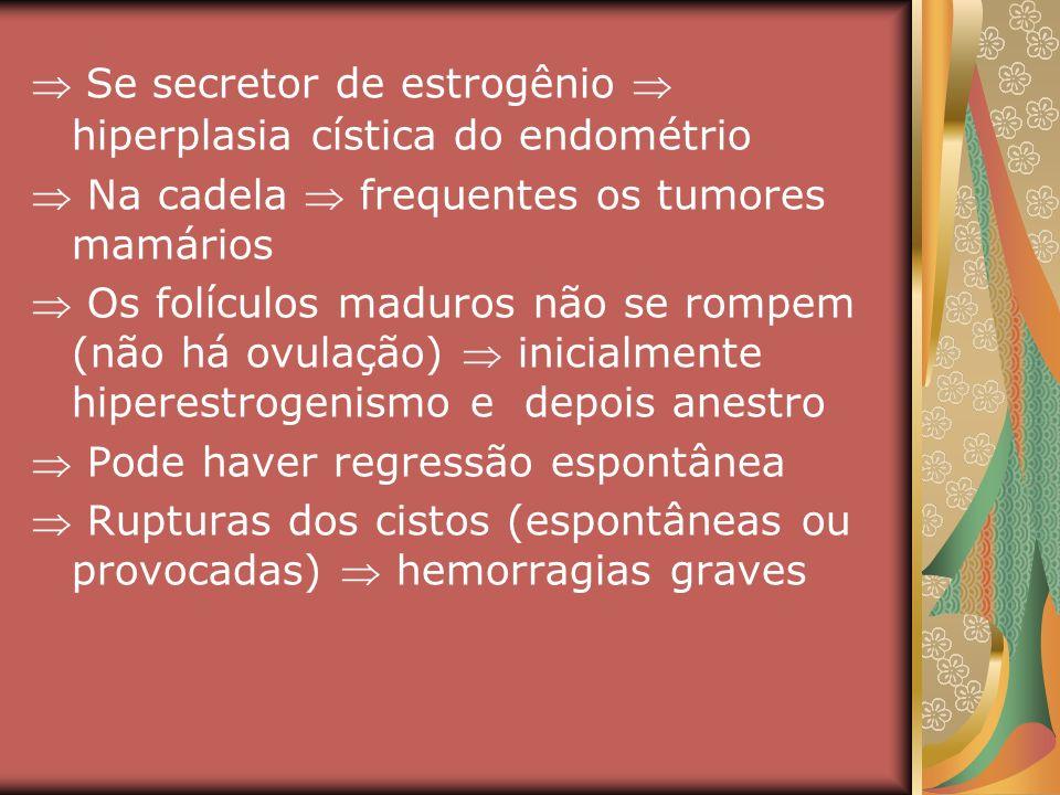 Se secretor de estrogênio hiperplasia cística do endométrio Na cadela frequentes os tumores mamários Os folículos maduros não se rompem (não há ovulaç