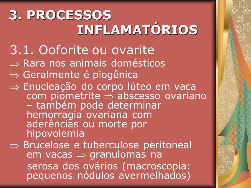 3. PROCESSOS INFLAMATÓRIOS 3.1. Ooforite ou ovarite Rara nos animais domésticos Geralmente é piogênica Enucleação do corpo lúteo em vaca com piometrit