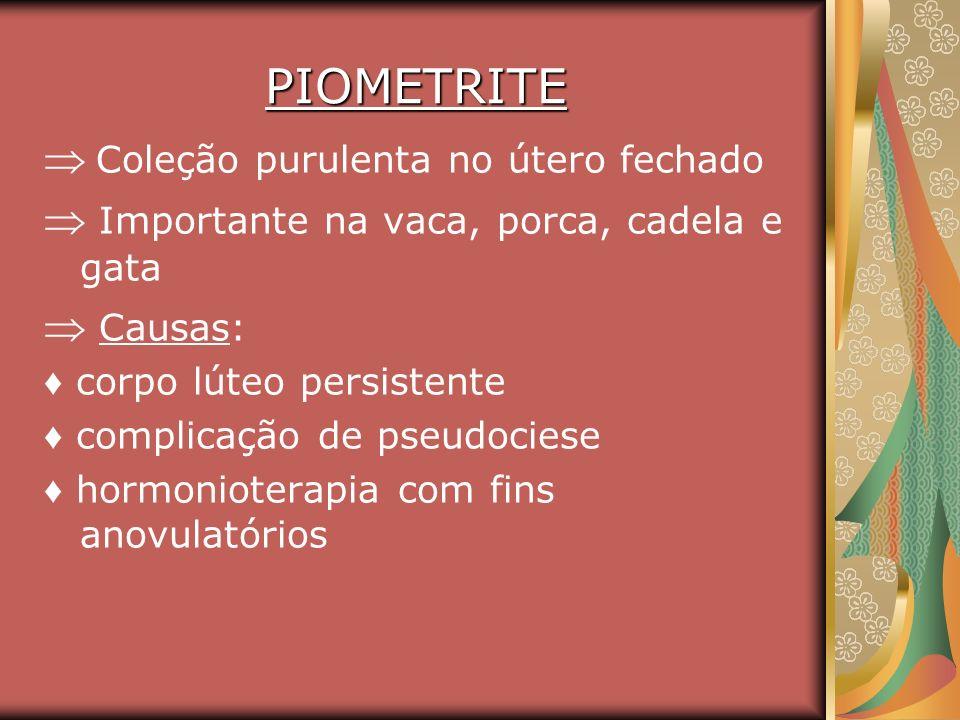 PIOMETRITE Coleção purulenta no útero fechado Importante na vaca, porca, cadela e gata Causas: corpo lúteo persistente complicação de pseudociese horm
