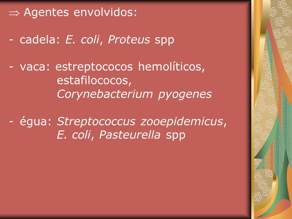 Agentes envolvidos: -cadela: E. coli, Proteus spp -vaca: estreptococos hemolíticos, estafilococos, Corynebacterium pyogenes -égua: Streptococcus zooep