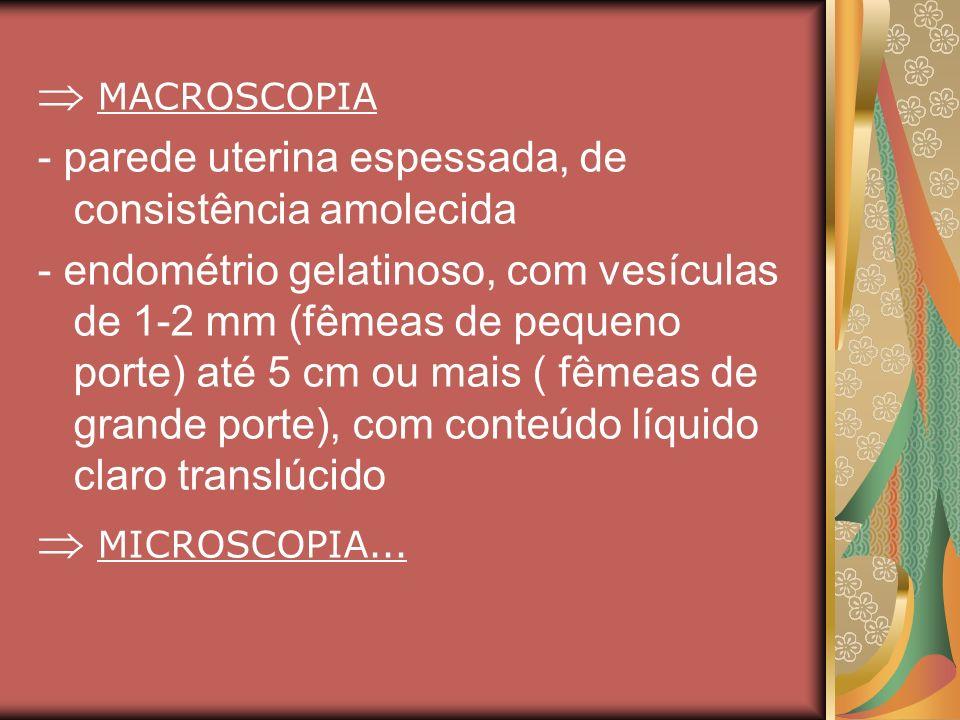 MACROSCOPIA - parede uterina espessada, de consistência amolecida - endométrio gelatinoso, com vesículas de 1-2 mm (fêmeas de pequeno porte) até 5 cm