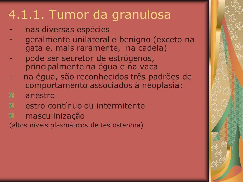 4.1.1. Tumor da granulosa -nas diversas espécies -geralmente unilateral e benigno (exceto na gata e, mais raramente, na cadela) -pode ser secretor de