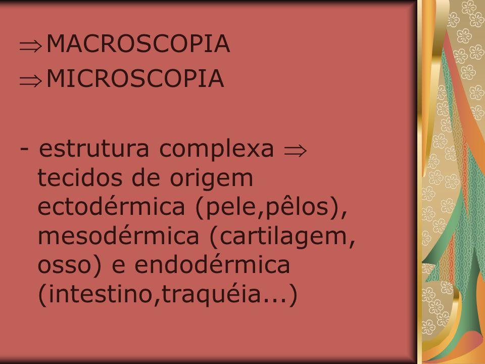 MACROSCOPIA MICROSCOPIA - estrutura complexa tecidos de origem ectodérmica (pele,pêlos), mesodérmica (cartilagem, osso) e endodérmica (intestino,traqu