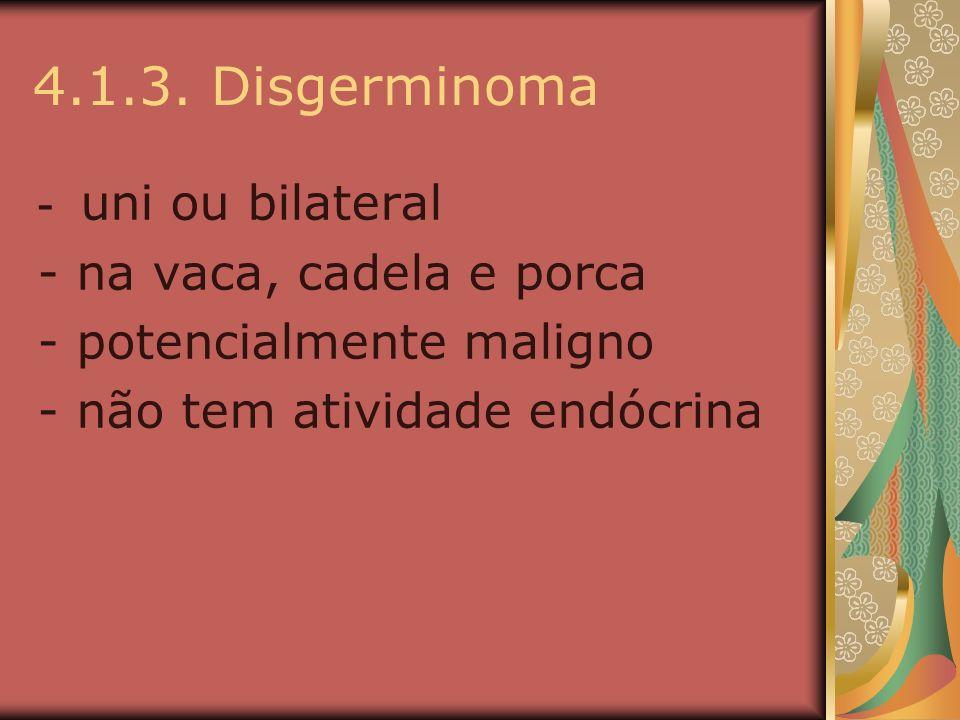 4.1.3. Disgerminoma - uni ou bilateral - na vaca, cadela e porca - potencialmente maligno - não tem atividade endócrina
