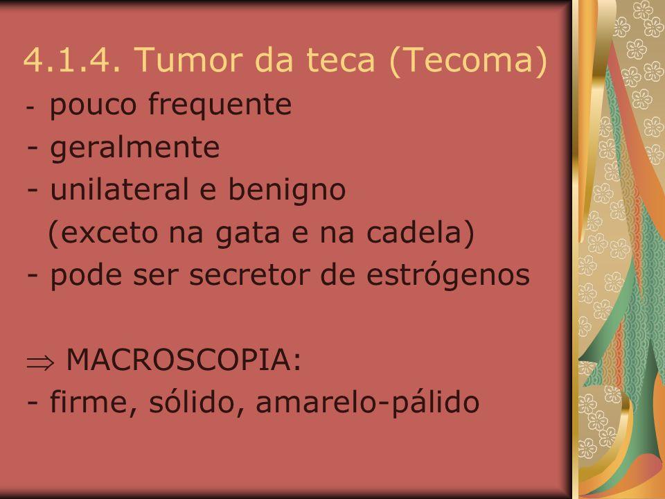 4.1.4. Tumor da teca (Tecoma) - pouco frequente - geralmente - unilateral e benigno (exceto na gata e na cadela) - pode ser secretor de estrógenos MAC