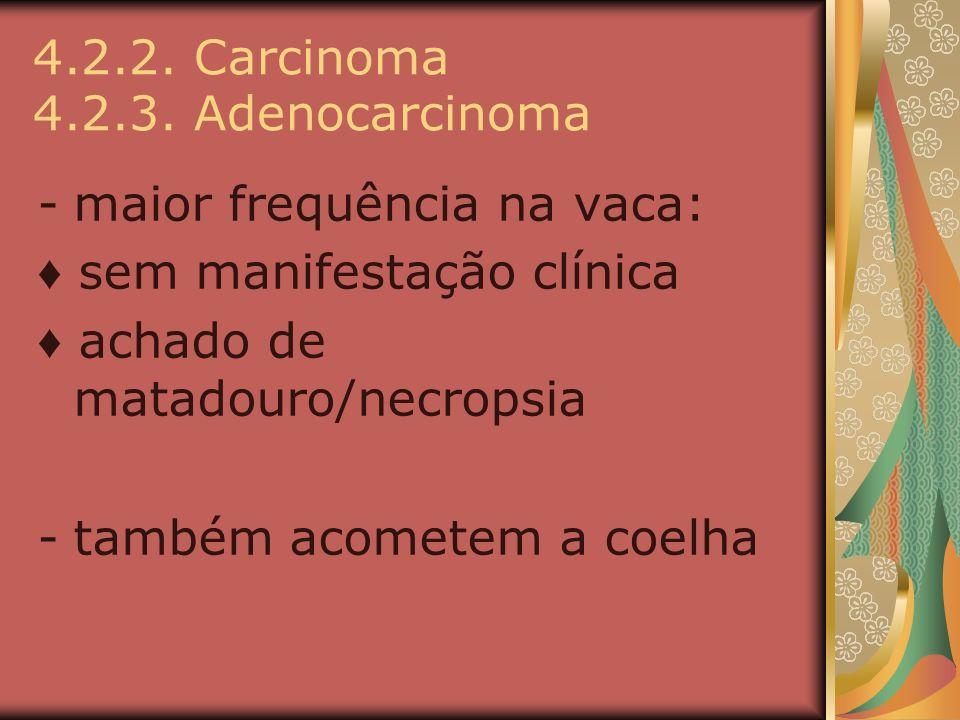 4.2.2. Carcinoma 4.2.3. Adenocarcinoma -maior frequência na vaca: sem manifestação clínica achado de matadouro/necropsia -também acometem a coelha