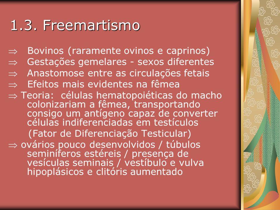 1.3. Freemartismo Bovinos (raramente ovinos e caprinos) Gestações gemelares - sexos diferentes Anastomose entre as circulações fetais Efeitos mais evi