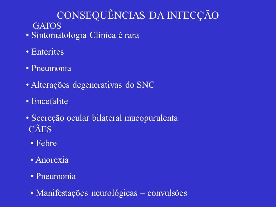 CONSEQUÊNCIAS DA INFECÇÃO GATOS Sintomatologia Clínica é rara Enterites Pneumonia Alterações degenerativas do SNC Encefalite Secreção ocular bilateral