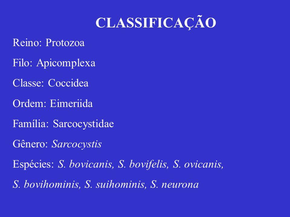 Reino: Protozoa Filo: Apicomplexa Classe: Coccidea Ordem: Eimeriida Família: Sarcocystidae Gênero: Sarcocystis Espécies: S. bovicanis, S. bovifelis, S