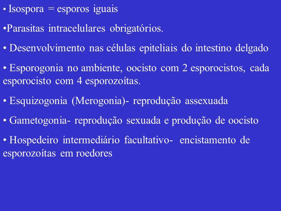 Isospora = esporos iguais Parasitas intracelulares obrigatórios. Desenvolvimento nas células epiteliais do intestino delgado Esporogonia no ambiente,