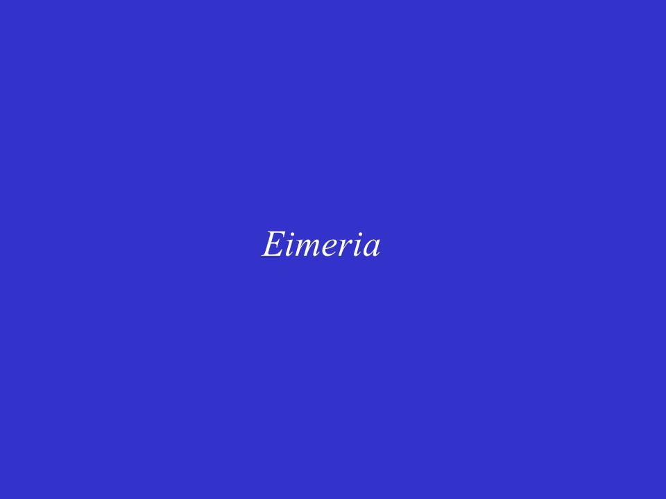 Eimeria