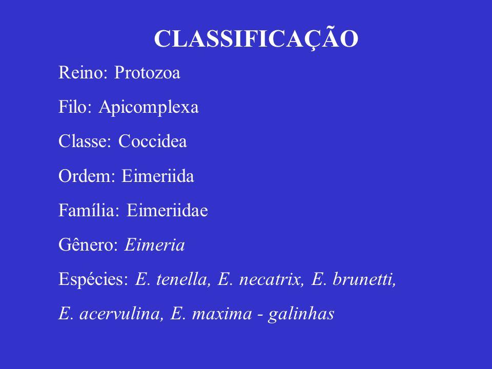 Reino: Protozoa Filo: Apicomplexa Classe: Coccidea Ordem: Eimeriida Família: Eimeriidae Gênero: Eimeria Espécies: E. tenella, E. necatrix, E. brunetti