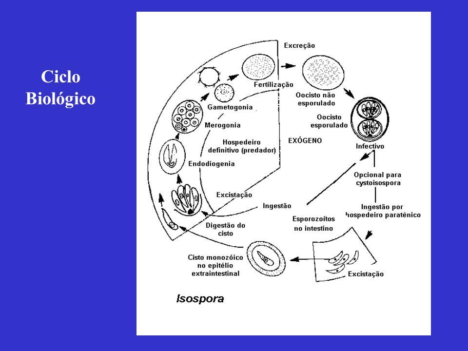 Reino: Protozoa Filo: Apicomplexa Classe: Coccidea Ordem: Eimeriida Família: Sarcocystidae Gênero: Sarcocystis Espécies: S.
