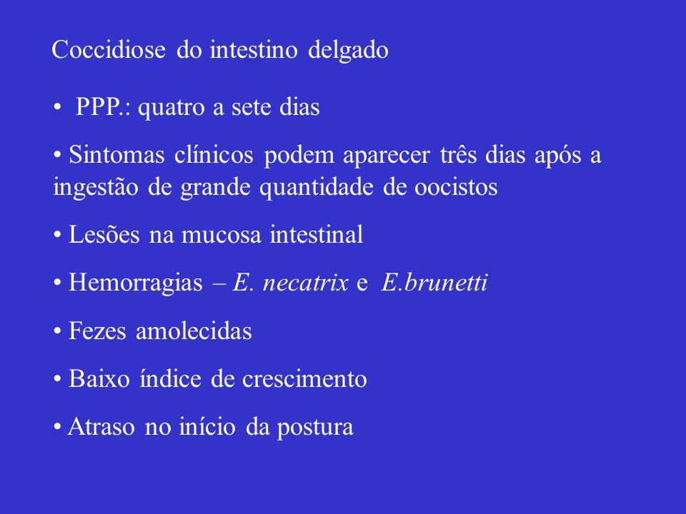 Coccidiose do intestino delgado PPP.: quatro a sete dias Sintomas clínicos podem aparecer três dias após a ingestão de grande quantidade de oocistos L