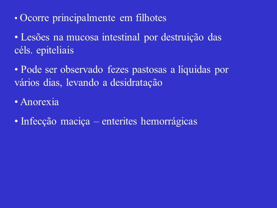 Ocorre principalmente em filhotes Lesões na mucosa intestinal por destruição das céls. epiteliais Pode ser observado fezes pastosas a líquidas por vár