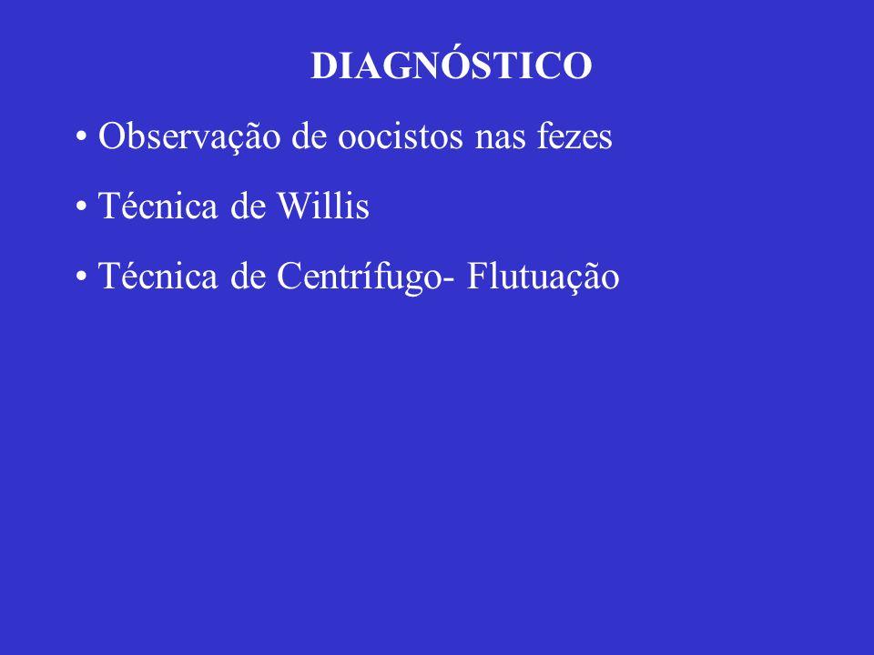 Parasita intracelular obrigatório Heteroxeno facultativo H.D.