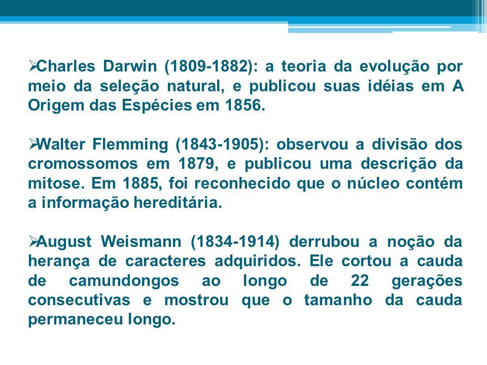 Charles Darwin (1809-1882): a teoria da evolução por meio da seleção natural, e publicou suas idéias em A Origem das Espécies em 1856. Walter Flemming