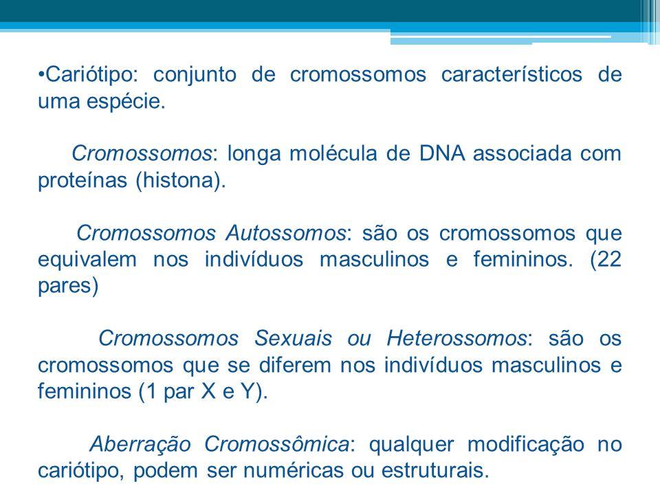 Cariótipo: conjunto de cromossomos característicos de uma espécie. Cromossomos: longa molécula de DNA associada com proteínas (histona). Cromossomos A