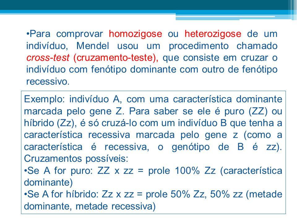 Para comprovar homozigose ou heterozigose de um indivíduo, Mendel usou um procedimento chamado cross-test (cruzamento-teste), que consiste em cruzar o