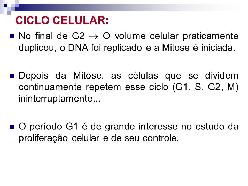 CICLO CELULAR: No final de G2 O volume celular praticamente duplicou, o DNA foi replicado e a Mitose é iniciada. Depois da Mitose, as células que se d