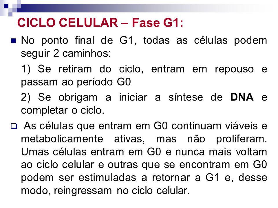 CICLO CELULAR – Fase G1: No ponto final de G1, todas as células podem seguir 2 caminhos: 1) Se retiram do ciclo, entram em repouso e passam ao período