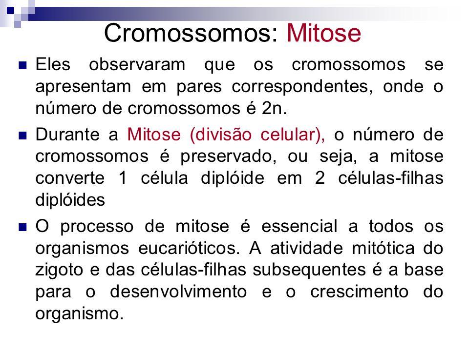 Cromossomos: Mitose Ex.: Em adultos, a atividade mitótica é a base para a cicatrização e outras formas de substituição celular em certos tecidos (pele e mucosa intestinal) Uma célula com 2n cromossomos duplica seus cromossomos (2n a 4n) antes de se dividir e formar duas células com 2n cromossomos.