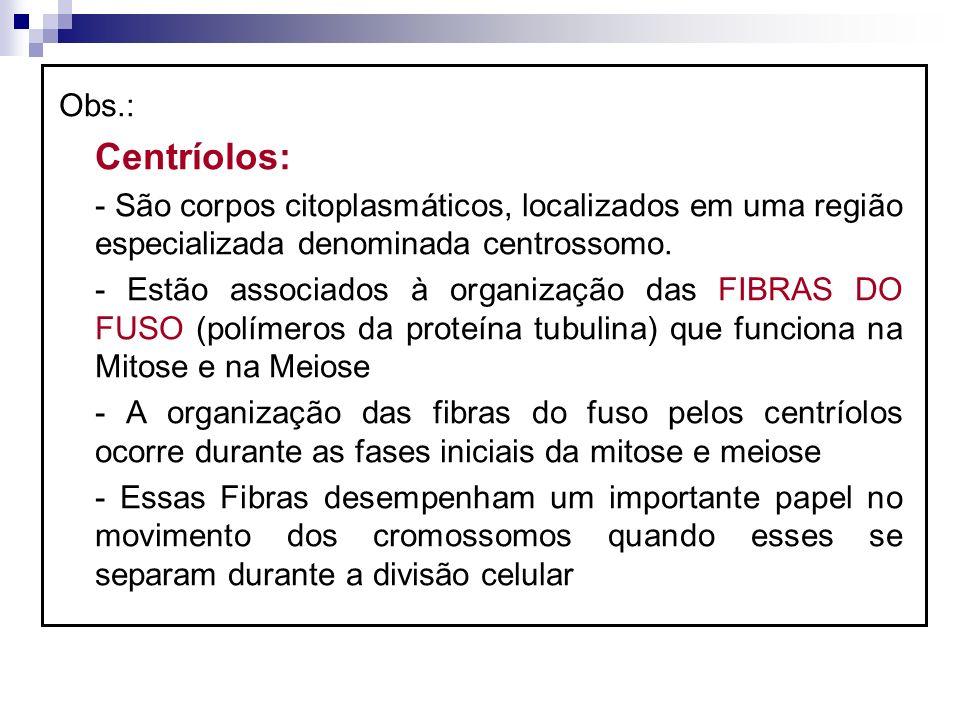 Obs.: Centríolos: - São corpos citoplasmáticos, localizados em uma região especializada denominada centrossomo. - Estão associados à organização das F