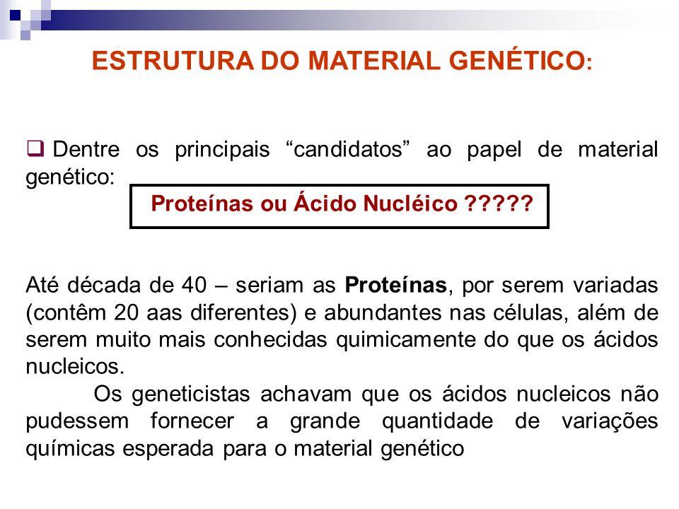 ESTRUTURA DO MATERIAL GENÉTICO : Dentre os principais candidatos ao papel de material genético: Proteínas ou Ácido Nucléico ????? Até década de 40 – s