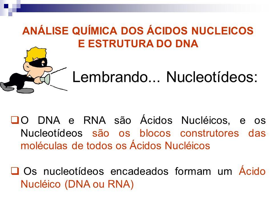 ANÁLISE QUÍMICA DOS ÁCIDOS NUCLEICOS E ESTRUTURA DO DNA O DNA e RNA são Ácidos Nucléicos, e os Nucleotídeos são os blocos construtores das moléculas d