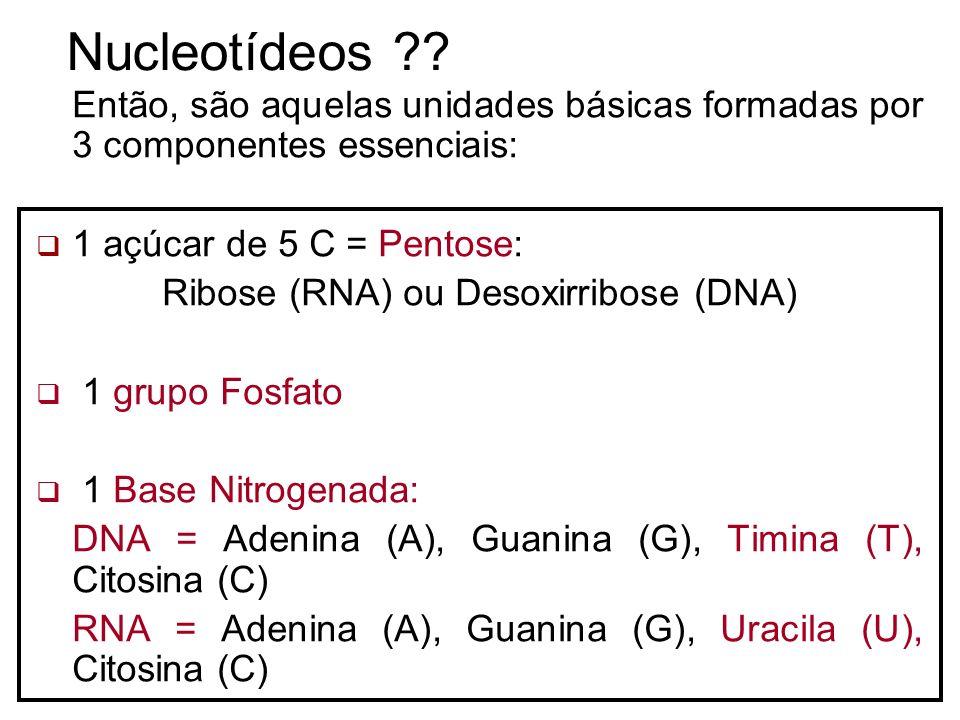 Nucleotídeos ?? Então, são aquelas unidades básicas formadas por 3 componentes essenciais: 1 açúcar de 5 C = Pentose: Ribose (RNA) ou Desoxirribose (D