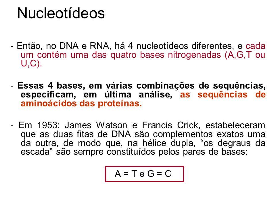 Nucleotídeos - Então, no DNA e RNA, há 4 nucleotídeos diferentes, e cada um contém uma das quatro bases nitrogenadas (A,G,T ou U,C). - Essas 4 bases,