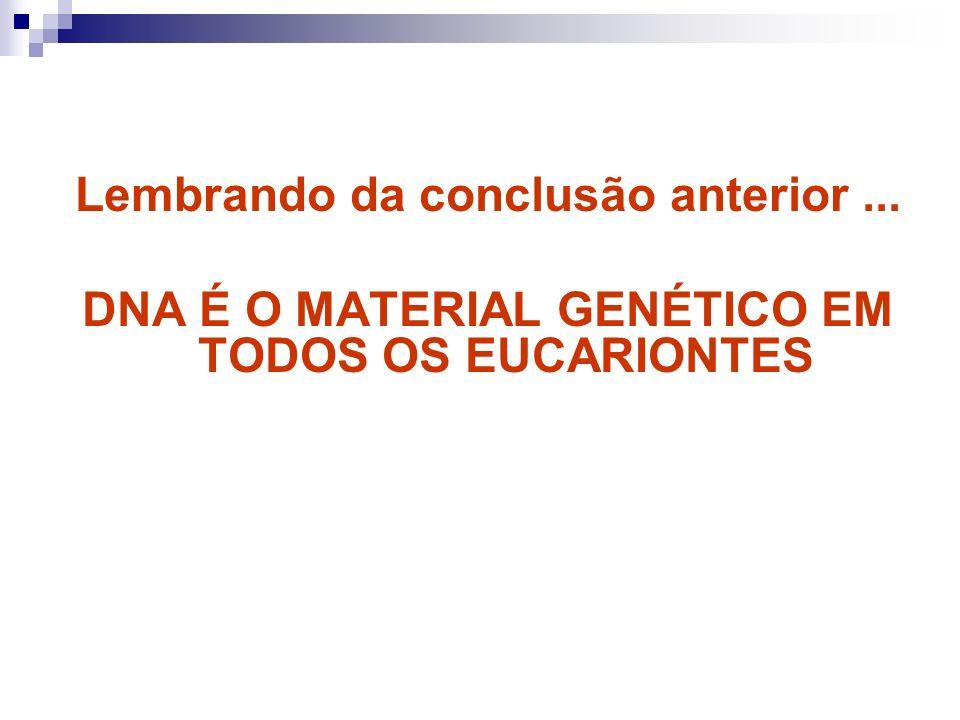 Lembrando da conclusão anterior... DNA É O MATERIAL GENÉTICO EM TODOS OS EUCARIONTES