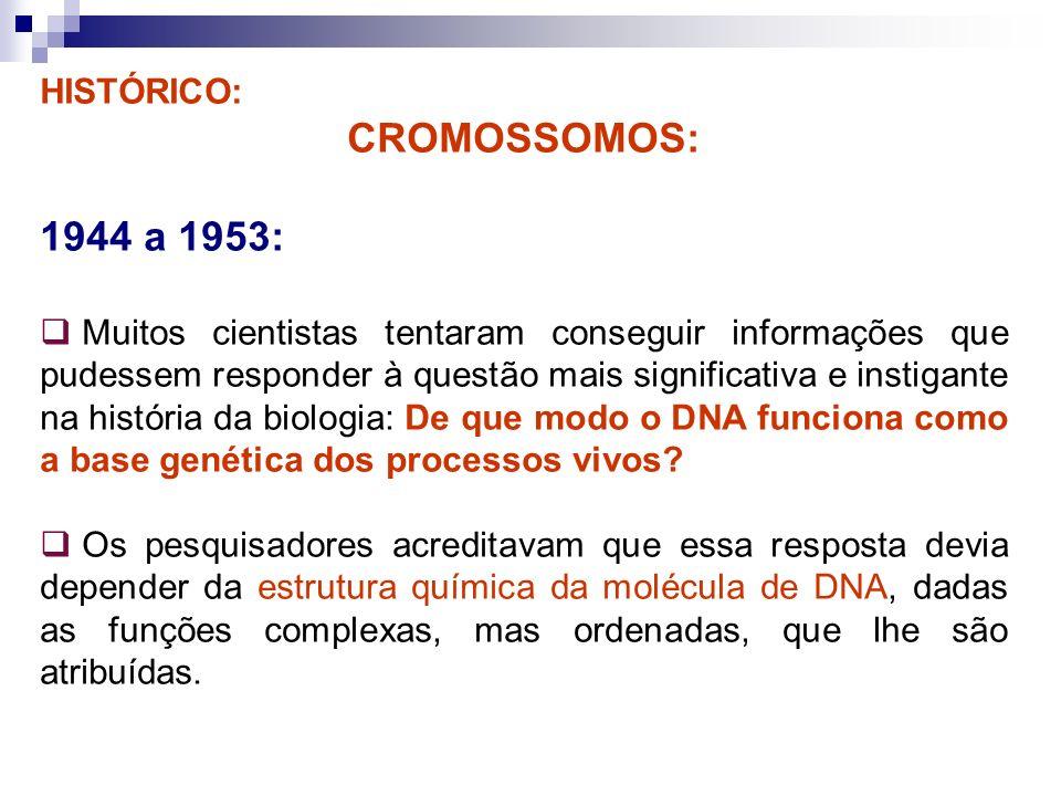 HISTÓRICO: CROMOSSOMOS: 1944 a 1953: Muitos cientistas tentaram conseguir informações que pudessem responder à questão mais significativa e instigante