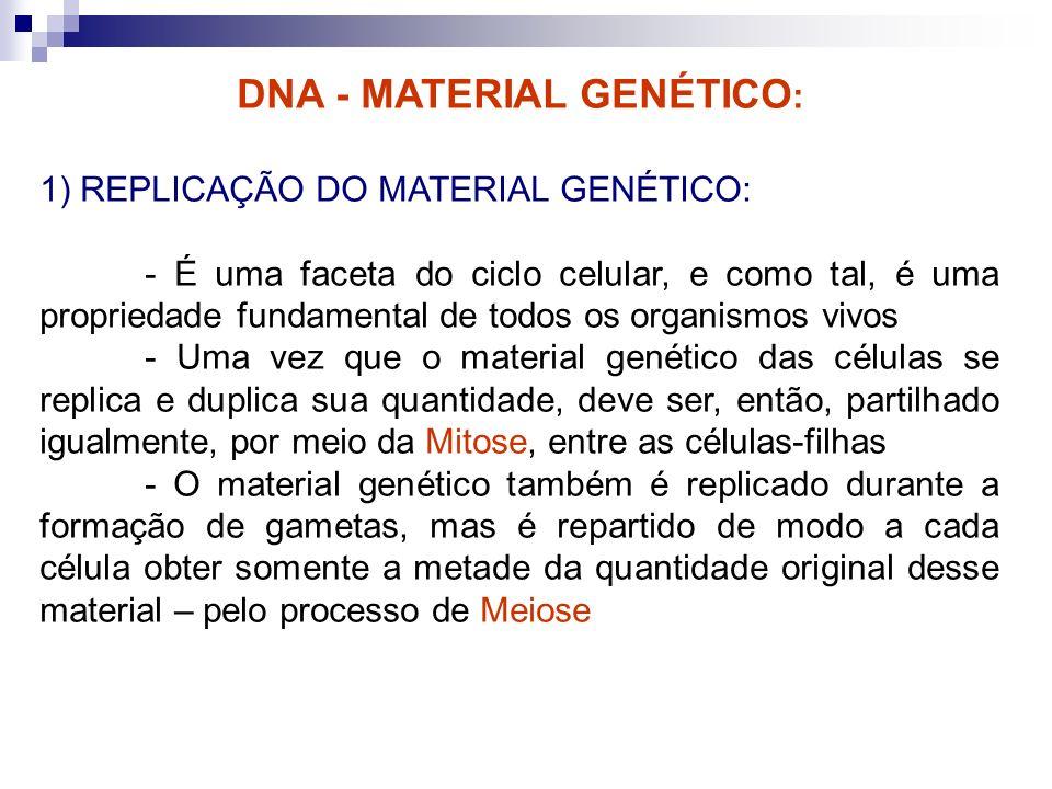 DNA - MATERIAL GENÉTICO : 1) REPLICAÇÃO DO MATERIAL GENÉTICO: - É uma faceta do ciclo celular, e como tal, é uma propriedade fundamental de todos os o