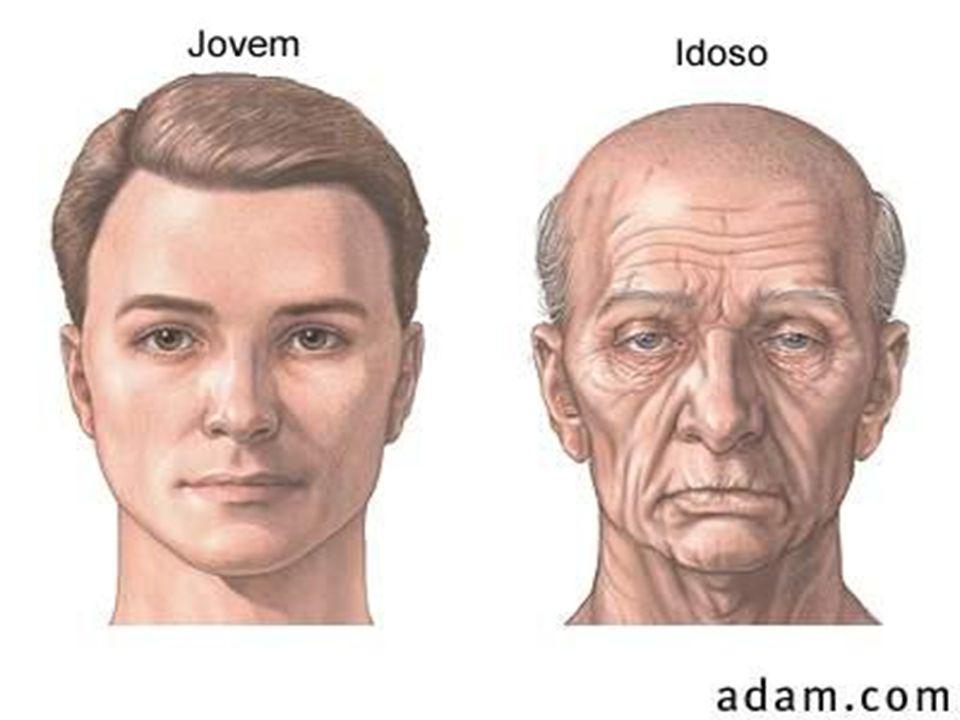 Alterações causadas pelo envelhecimento no coração e vasos sangüíneos - As células do músculo cardíaco passam por um processo lento de degeneração.