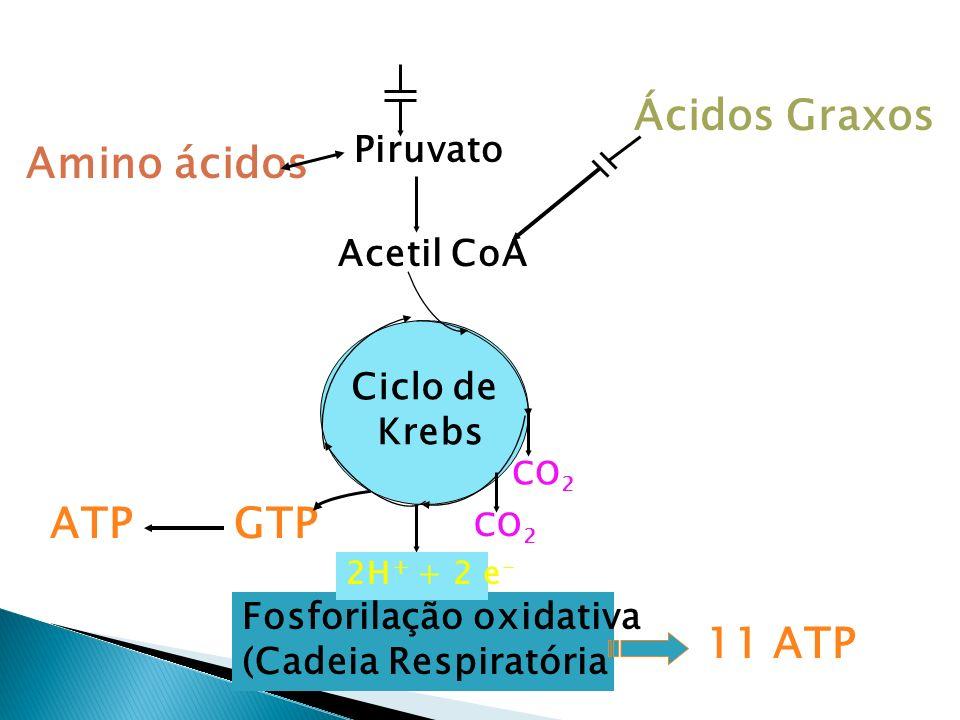 Glicose Amino ácidos Ácidos Graxos Piruvato Acetil CoA Fosforilação oxidativa (Cadeia Respiratória GTP CO 2 Ciclo de Krebs 2H + + 2 e - 11 ATP ATP