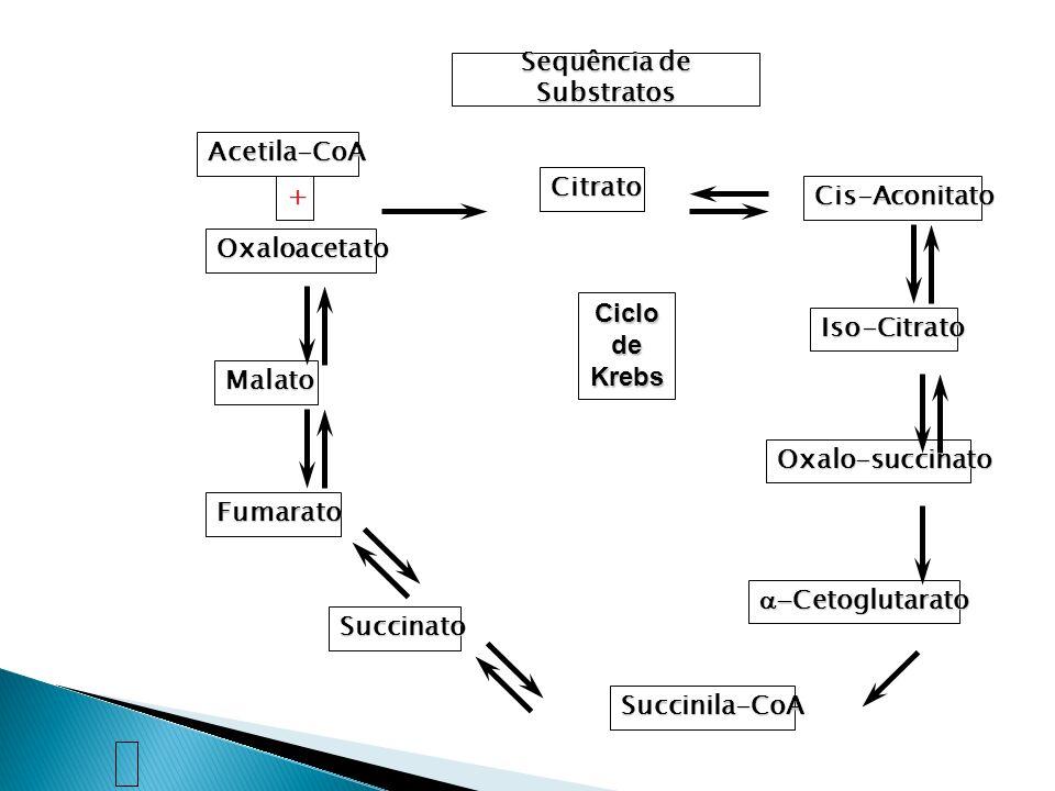 Seqüência de Substratos Acetila-CoA + Oxaloacetato Citrato Cis-Aconitato Iso-Citrato Oxalo-succinato Cetoglutarato Cetoglutarato Succinila-CoA Succina