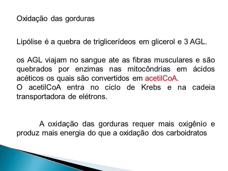 Lipólise é a quebra de triglicerídeos em glicerol e 3 AGL. os AGL viajam no sangue ate as fibras musculares e são quebrados por enzimas nas mitocôndri
