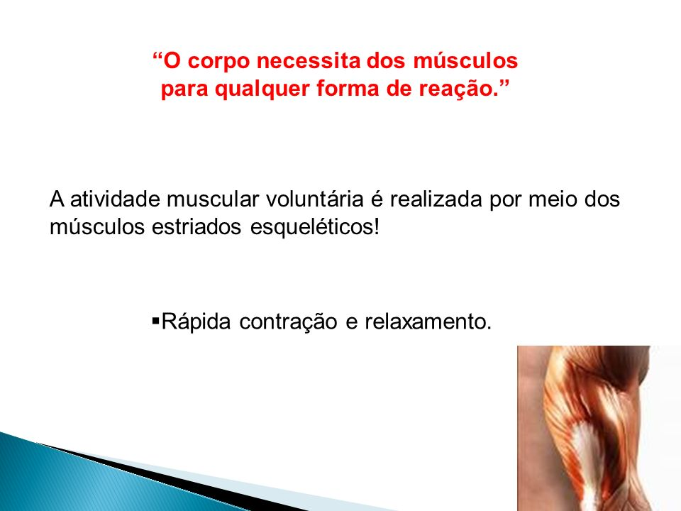 A atividade muscular voluntária é realizada por meio dos músculos estriados esqueléticos! O corpo necessita dos músculos para qualquer forma de reação