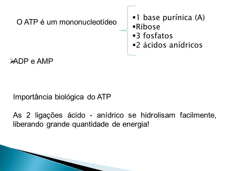 O ATP é um mononucleotídeo 1 base purínica (A) Ribose 3 fosfatos 2 ácidos anídricos ADP e AMP Importância biológica do ATP As 2 ligações ácido - anídr