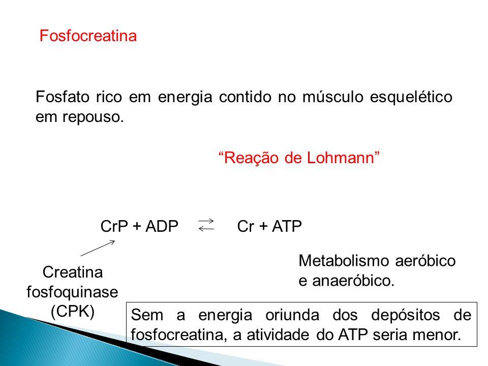Fosfocreatina Fosfato rico em energia contido no músculo esquelético em repouso. Reação de Lohmann CrP + ADP Cr + ATP Creatina fosfoquinase (CPK) Meta