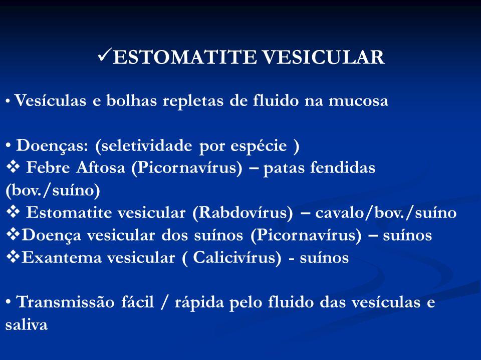 MACROSCOPIA: vesículas...bolhas...