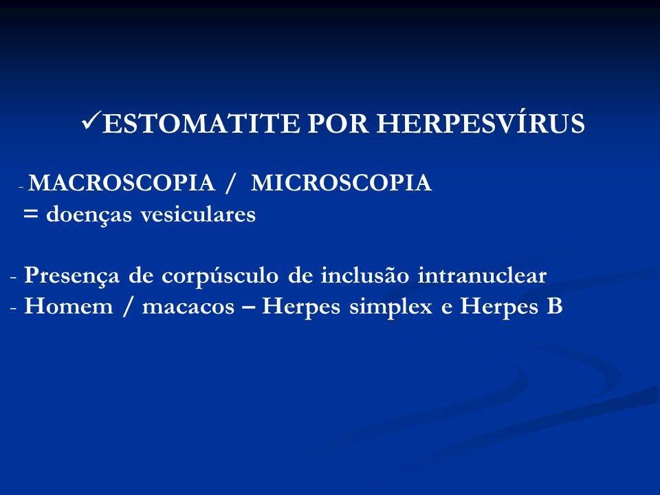 ESTOMATITE NECRÓTICA – NECROBACILOSE Fusobacterium necrophorum – bezerros, leitões e cães deficiência nutricional subjacente MACROSCOPIA: ulcerações acinzentadas (fétidas) na gengiva interdental cobertas por pseudomembrana acinzentada MICROSCOPIA: inflamação necrosante aguda (necrose de coagulação) envolta por tecido de granulação.