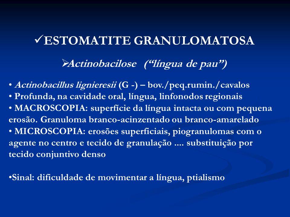Actinomicose Actinomyces bovis (G +) – bov.