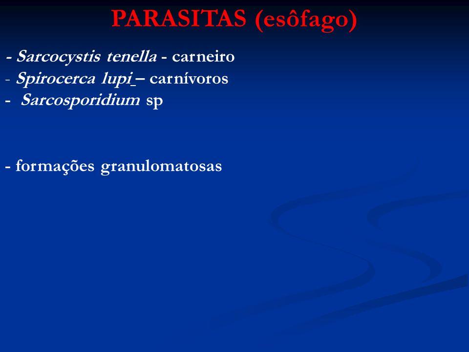 PARASITAS (esôfago) - Sarcocystis tenella - carneiro - Spirocerca lupi – carnívoros - Sarcosporidium sp - formações granulomatosas