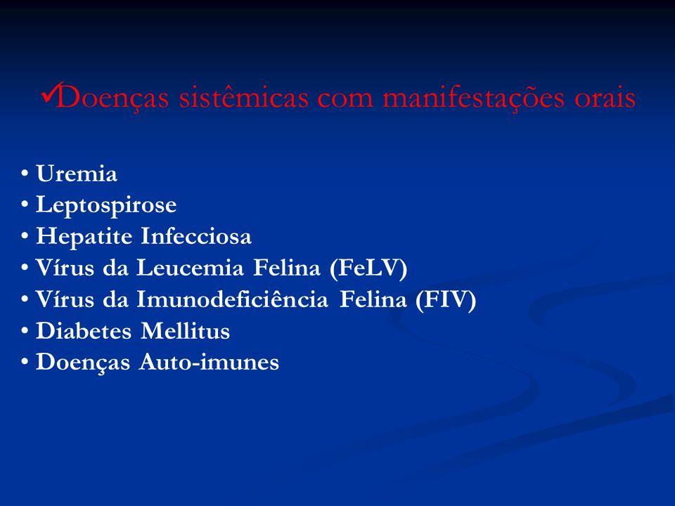 Superiores: 6 I - 2 C - 8 PM - 4 M Inferiores: 6 I - 2 C - 8 PM - 6 M