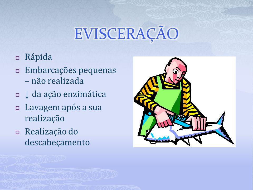 Uso do gelo da atividade enzimática da atividade bacteriana Redução da temperatura do pescado por contato direto.