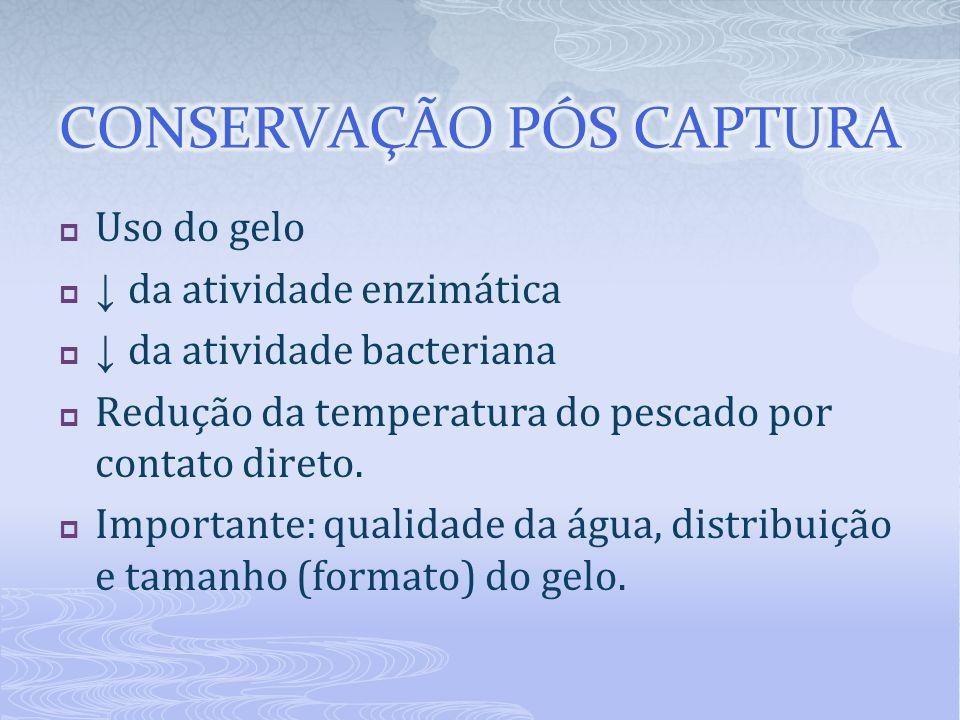 Cuidados: Separar por espécie e por tamanho Revestir a parede e fundo das urnas (15 cm de gelo ) Colocar o peixe eviscerado de barriga para baixo Pescado + gelo em camadas não superiores a 1 metro de altura Sardinhas = 0,5m (50 cm) Peixe alto valor comercial = 0,6m (60cm) Proporção pescado : gelo (3:1) Repor o gelo